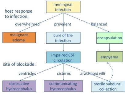 empyèmes continuum